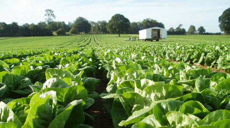 Английските фермери се нуждаят от работна ръка в земеделието